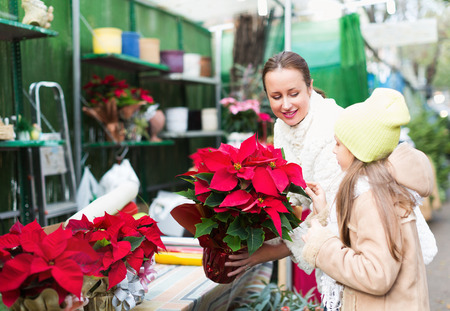 35 40 years: Mom with excited child buying Christmas star flower in market. Focus on woman