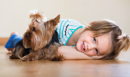 playful: Playful cute little girl having fun with Yorkshire Terrier on the floor indoor