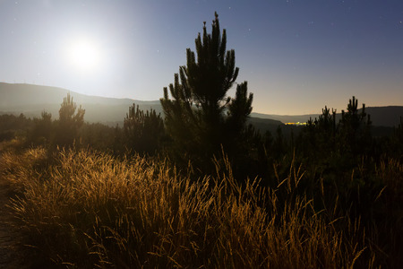 nighty: nighty lanscape with grass and pine