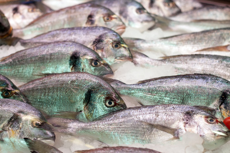 gilthead bream: Raw fresh gilt-head bream fish on spanish market counter