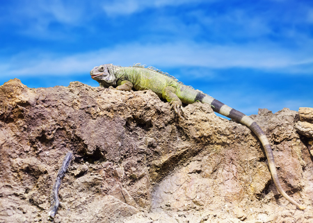 wildness: Green lizard at wildness against  sky Stock Photo