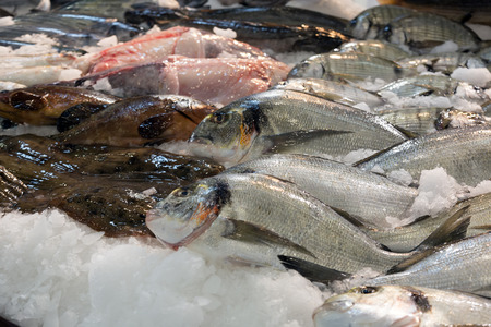 gilthead bream: Raw fresh gilt-head bream and other fish
