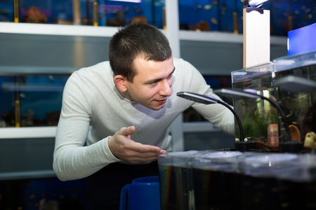 fish tank: Male customer choosing tropical fish in aquarium tank