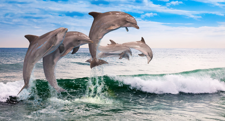 caudal fin: six dolphins jumping together in the ocean waves