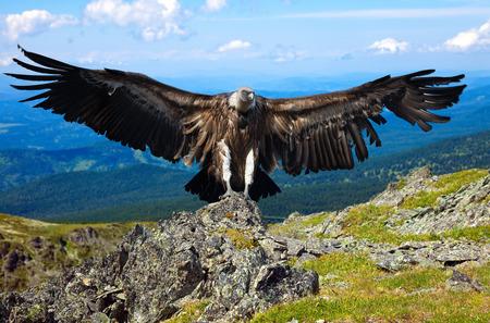 span: full length shot of vulture  against rocky background Stock Photo