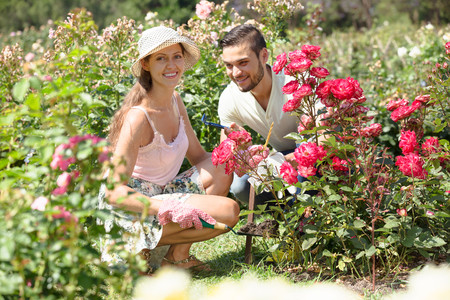 family gardening: Young happy family gardening in rose garden Stock Photo