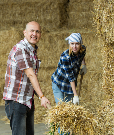 dry cow: Young and mature fermers preparing hay for feeding livestock