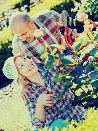70 75: Positive smiling mature couple gardening with roses in the backyard garden