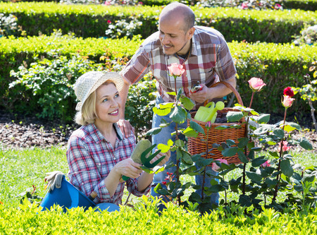 looking after: Charming senior couple looking after flowers in the garden