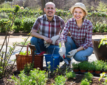 70 75: Happy smiling elderly couple gardening with flowers in the backyard in sunny day Stock Photo