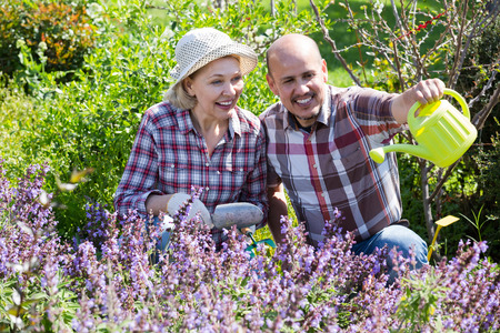 70 75: Portrait of happy smiling senior couple taking care of flowers in the blossoming garden