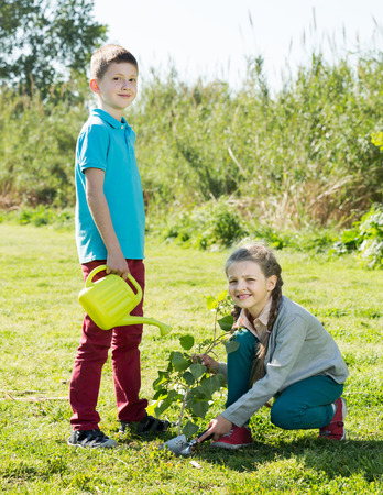 sembrando un arbol: Teenage boy and smiling girl planting a tree outdoors in a sunny weather Foto de archivo
