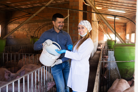 forage: Portrait of female veterinarian and male farmer talking about all-mash forage for animals in pigsty Stock Photo