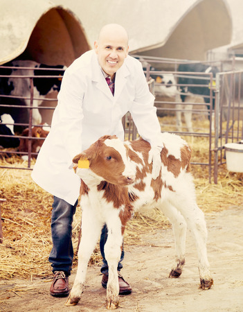 nursing young: Happy senior employee in gown nursing young cattle in cowhouse outdoors