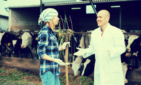 milker: Male vet and professional cowgirl talking in livestock barn Stock Photo