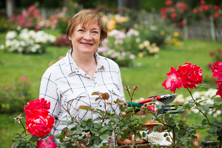 red bush: portrait of cheerful retiree woman gardening red bush roses outdoors in yard
