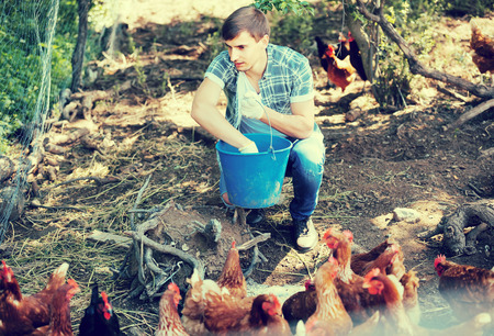 forage: smiling young european man farmer strewing bird forage on country yard with chickens