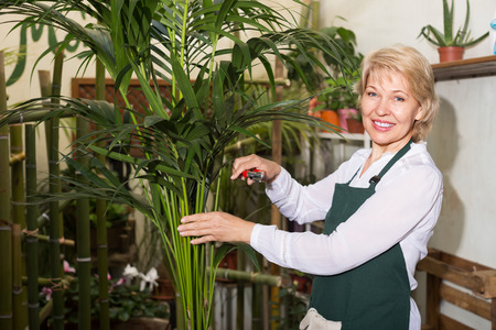 Portrait of smiling mature woman florist with clippers among green plants in floral shop Stock Photo
