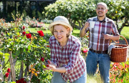 looking after: Positive senior spouses looking after flowers in the garden on a sunny day