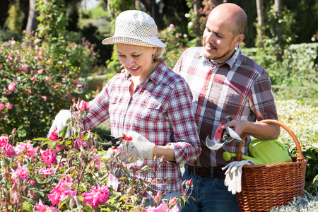 70 75: Portrait of smiling elderly couple taking care of flowers in the blossoming garden