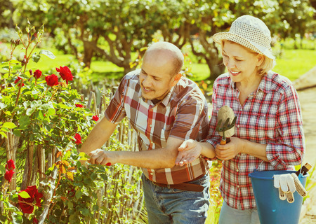 looking after: Smiling happy  senior couple looking after flowers in the garden Stock Photo