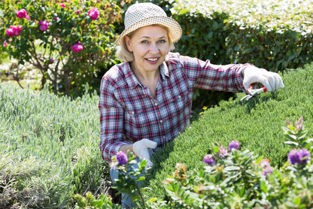 Adult woman engaged in gardening bushes with scissors in hands in the backyard garden