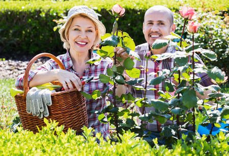 looking after: Cheerful positive senior couple looking after flowers in the garden