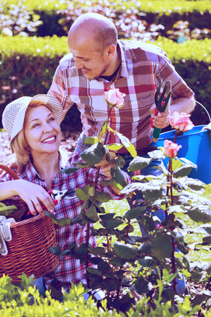 looking after: Smiling cheerful positive senior couple looking after flowers in the garden Stock Photo