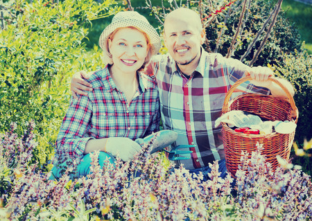 70 75: Ordinary  charming positive senior couple looking after flowers in the garden