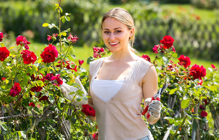 horticultural: cute young woman working with bush roses with horticultural tools in garden on sunny day