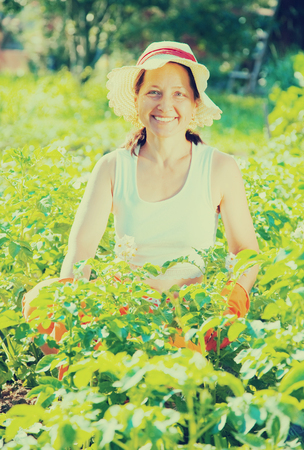 pensionary: Senior woman sitting in field of potato Stock Photo