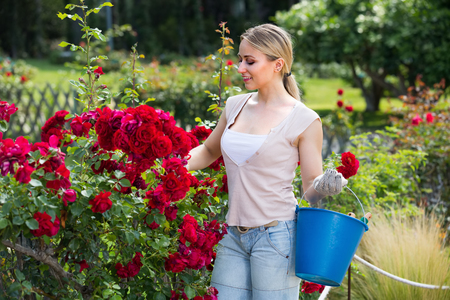horticultural: smiling young woman working with bush roses with horticultural tools in garden on sunny day