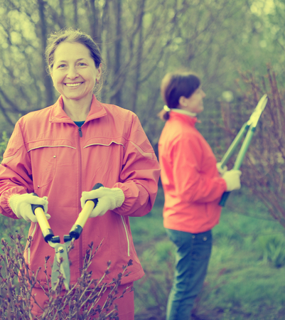 secateur: Female gardener cuts branches in the garden in spring Stock Photo