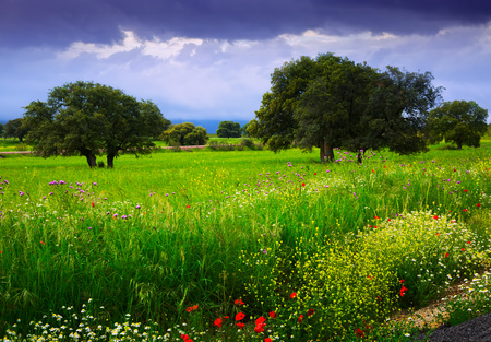 Rural field with green grass, small flowers and heavy rainy cloudscape Stock Photo