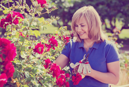 horticultural: Smiling happy charming mature woman gardening red roses and holding horticultural tools on sunny day
