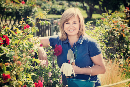 Smiling blond mature woman gardening red roses and holding horticultural tools on sunny day