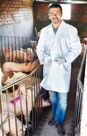 swine flu vaccines: Portrait of male veterinarian in white coat and facial mask with syringe and vial in pigsty