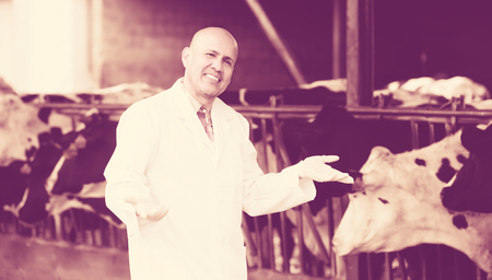 overall: Smiling male veterinarian in white overall standing near cows in farm