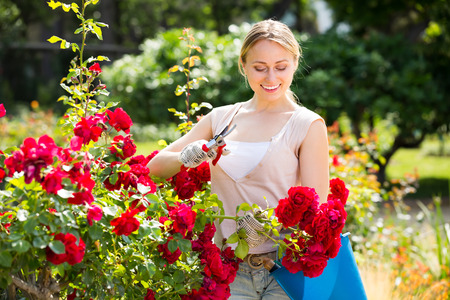 portrait of joyful smiling young  female gardener planting and trimming blossoming bush roses in yard