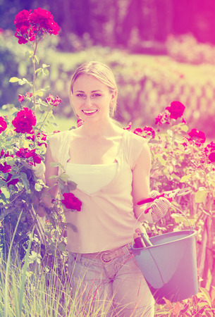 horticultural: positive young female working with bush roses with horticultural tools in garden on sunny day Stock Photo