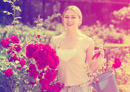 horticultural: glad young woman working with bush roses with horticultural tools in garden on sunny day