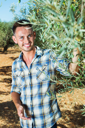 horticultural: Cheerful  charming man gardener standing in olive tree garden on sunny day