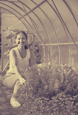 forcing bed: Smiling woman picking dill in the hothouse