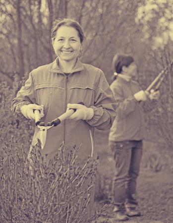 shrubbery: Two women cutting shrubbery at garden Stock Photo