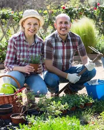 Senior smiling couple engaged in gardening in the backyard garden