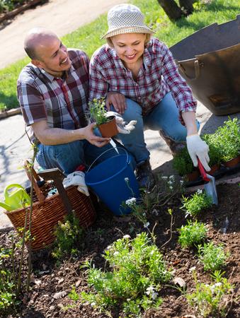 Joyful smiling elderly couple taking care of green plants in the garden