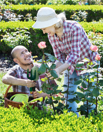 70 75: Smiling  positive senior couple looking after flowers in the garden Stock Photo