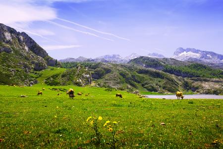 covadonga: mountains landscape with lake.  Lakes of Covadonga.  Asturias, Spain