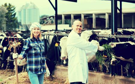 vacas lecheras: Retrato pareja de veterinarios que presenta con la leche en las vacas en la casa de la vaca al aire libre Foto de archivo