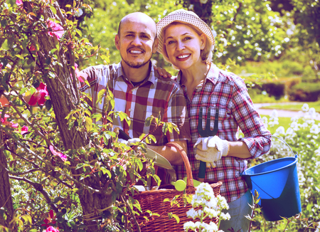 70 75: portrait of a lovely smiling senior couple taking care of green plants in the garden